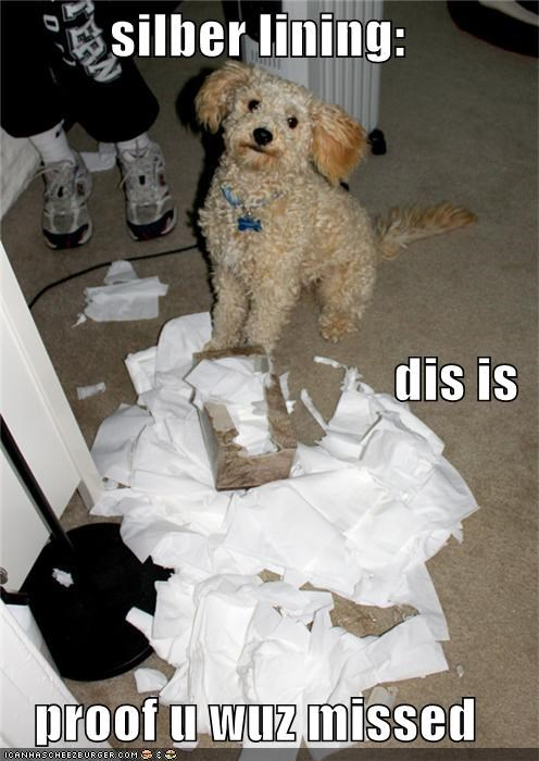 bright side,excuse,explanation,human,lining,mess,missed,poodle,positive,proof,silver,silver lining,toilet paper