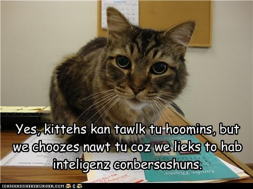 Yes, kittehs kan