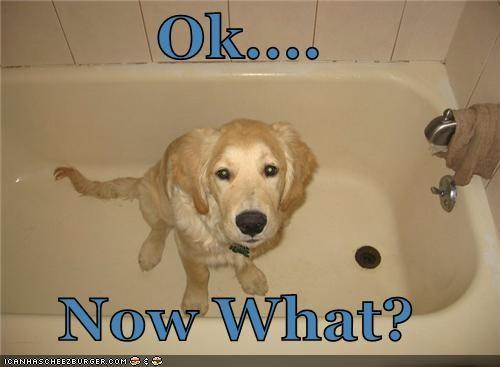 bath,bathtub,ignorant,labrador,now,ok,question,tub,what