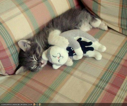 cyoot kitteh of teh day,sleeping,snuggles,snuggling,stuffed animals,toys