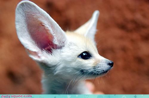 Squee Spree: Pretty Fennec Side Profile