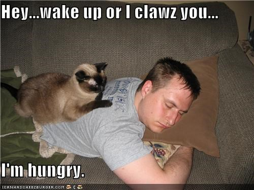 Hey...wake up or I clawz you...  I'm hungry.