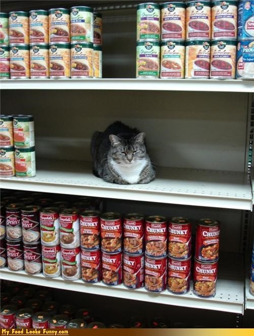 cat,shelf,soup,store