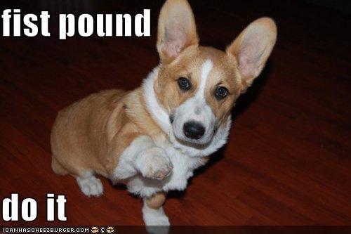 best of the week,Command,corgi,do it,fist,fist pound,Hall of Fame,i has a hotdog,pound