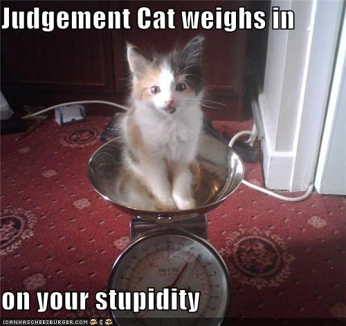 Judgement Cat weighs in  on your stupidity
