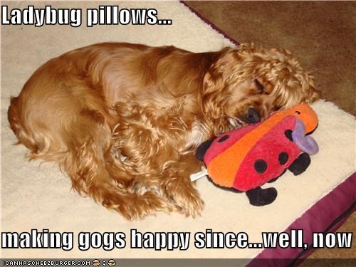 cocker spaniel,dogs happy,ladybug,making,mixed breed,now,Pillow,pillows,since,slogan,statement,well