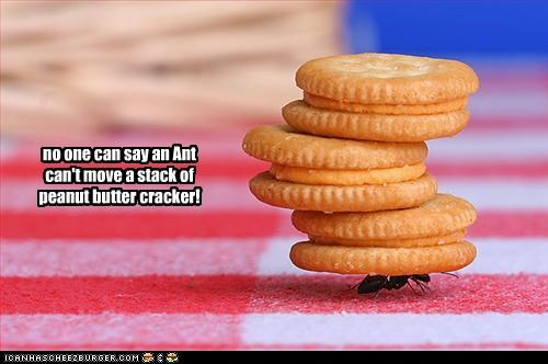 no one can say an Ant can't move a stack of peanut butter cracker!