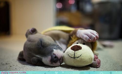 boxer,cuddling,dogs,friendship,homophone,interspecies friendship,lion,method,only way,pun,puppy,sleeping,stuffed animal,toy