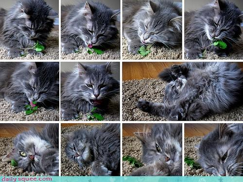 cat,catnip,collage,drug,montage,reader squees,stages