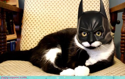 accident,acting like animals,awesome,batcat,batman,cat,costume,disguised,Hall of Fame,mask,robin,signal,trouble