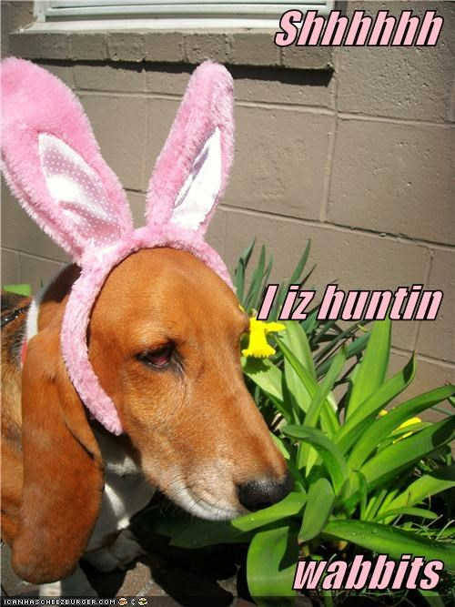 basset hound,bunny,bunny ears,costume,dressed up,ears,hunting,looney tunes,quiet,rabbits,shush