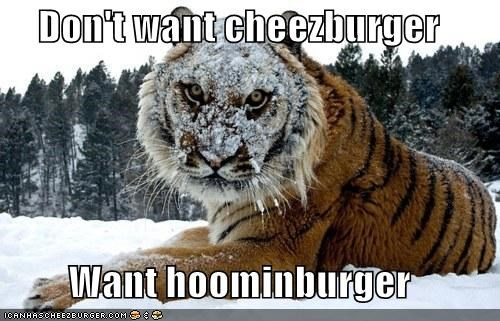 Don't want cheezburger  Want hoominburger