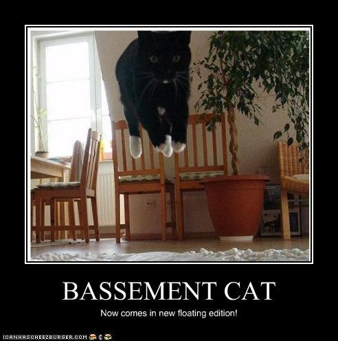 BASSEMENT CAT