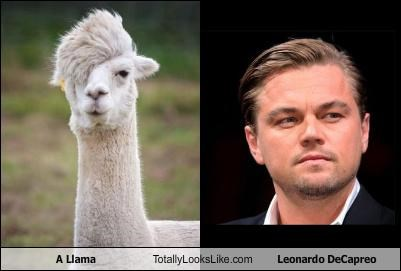 actors,alpaca,animals,Hall of Fame,leonardo dicaprio,llama