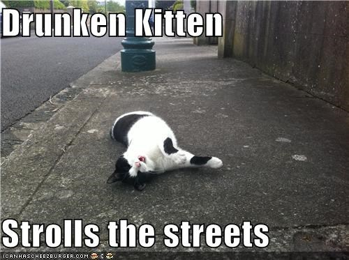 Drunken Kitten  Strolls the streets