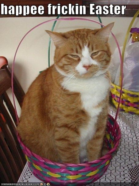 basket,caption,captioned,cat,do not want,easter,happy,happy easter,sarcasm,sitting,tabby,upset