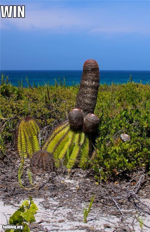 Things That Are Doing It: Cactus FAIL