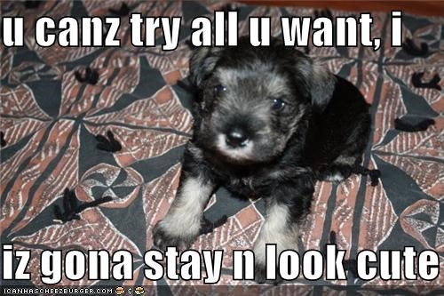 all,cute,look,puppy,stay,try,want,whatbreed