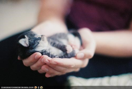 Cyoot Kitteh of teh Day: Palm-Sized Purrfektness