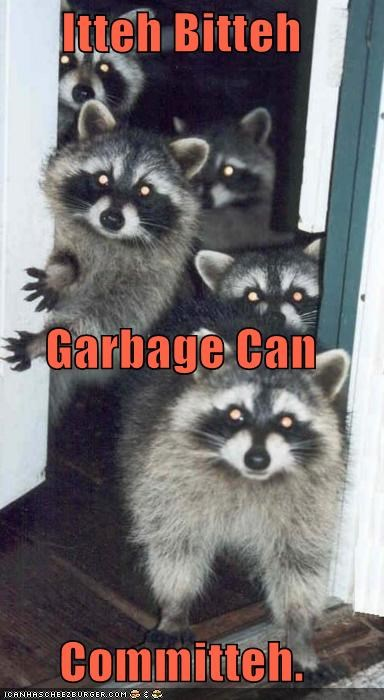 can,caption,captioned,committee,garbage,garbage can,itty bitty,raccoon,raccoons