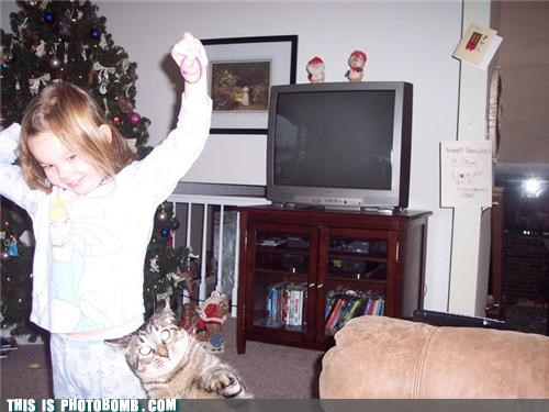 Animal Bomb,cat,christmas,kid