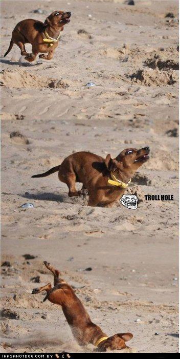 beach,dachshund,fall,hole,run,trip,troll