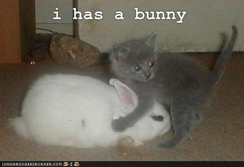 I Has a Bunny: 10 Pictures of Kittehs and Bunnehs Together