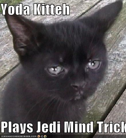 Yoda Kitteh  Plays Jedi Mind Tricks