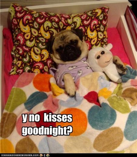 bed,goodnight,kisses,lamb,no,pajamas,pug,question,sleeping,stuffed animal,tucked in,why