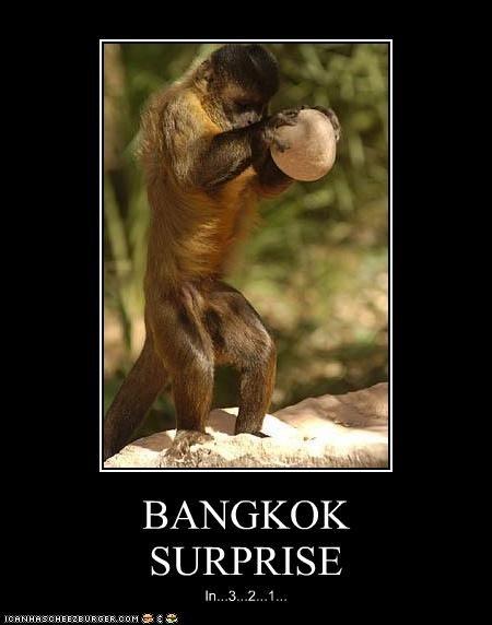BANGKOK SURPRISE