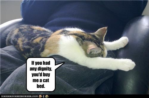 If you had any dignity, you'd buy me a cat bed.