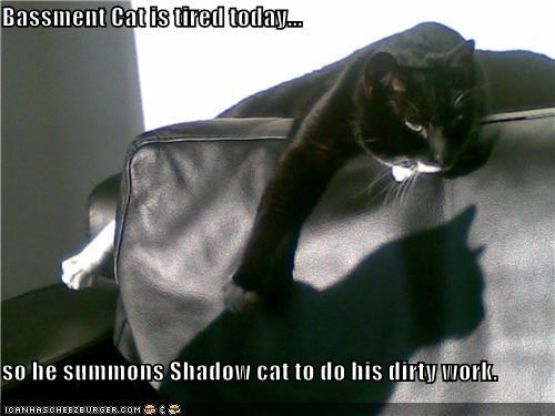 Bassment Cat is tired today...  so he summons Shadow cat to do his dirty work.