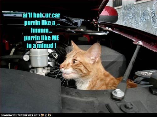 Mechanic kitteh