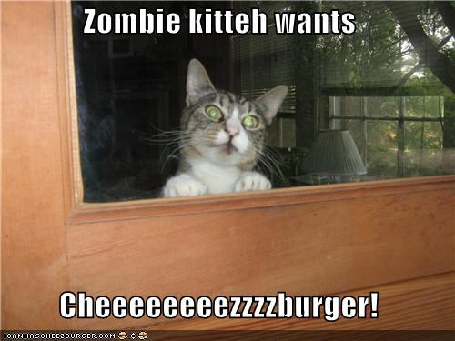 Zombie kitteh wants  Cheeeeeeeezzzzburger!