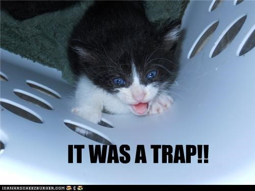IT WAS A TRAP!!