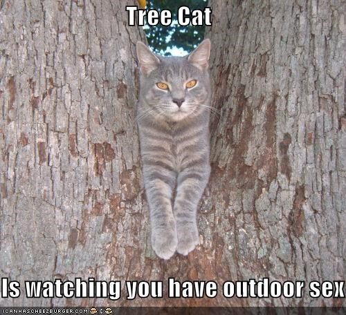 Tree Cat  Is watching you have outdoor sex