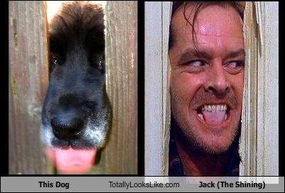 This Dog Totally Looks Like Jack Nicholson (The Shining)