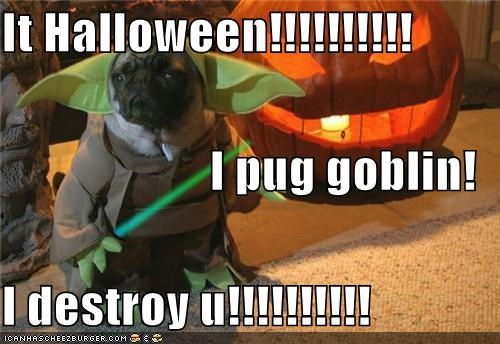 It Halloween!!!!!!!!!! I pug goblin! I destroy u!!!!!!!!!!