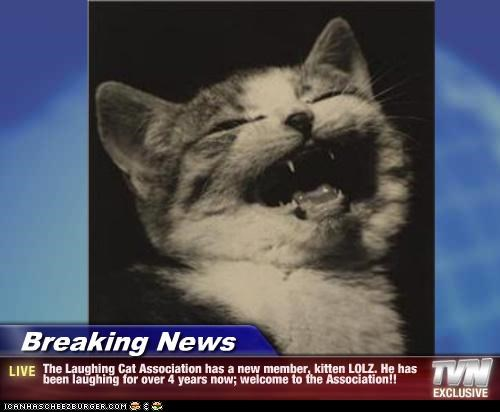 Breaking News - The Laughing Cat Association has a new member, kitten LOLZ. He has been laughing for over 4 years now; welcome to the Association!!