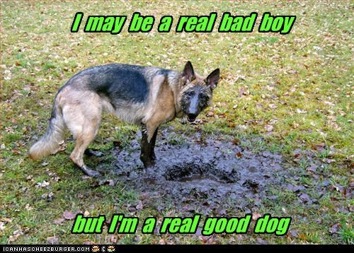 real bad boy...must be Tim McGraw's dog