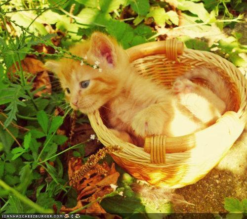 basket,baskets,cyoot kitteh of teh day,orange,outside,plants,sunlight
