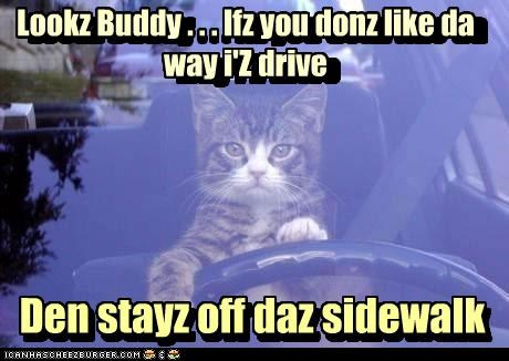advice,caption,captioned,car,cat,dont-like,drive,driving,kitten,off,response,sidewalk,solution,stay,stay off,way