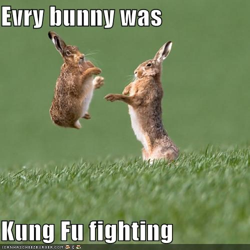 best of the week,bunny,caption,captioned,everybody,fighting,I Can Has Cheezburger,kung fu,lyric,pun,rabbit,rabbits,song,was