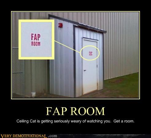 celing cat,room,fapping