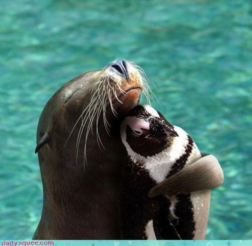 do want,flipper,flippers,friends,friendship,hug,hugging,interspecies friendship,jealous,penguin,sea lion,sealion