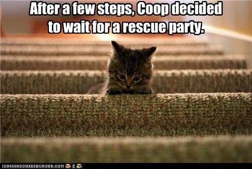 afraid,after,caption,captioned,cat,decided,decision,few,kitten,Party,rescue,stairs,steps,wait
