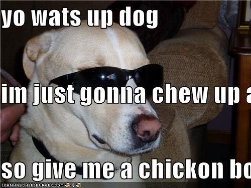 yo wats up dog im just gonna chew up a chickon bone so give me a chickon bone