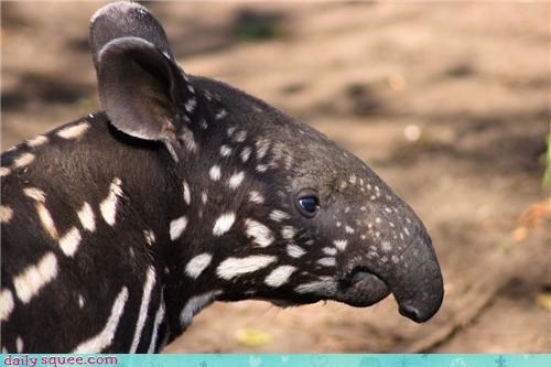 Happy World Tapir Day!