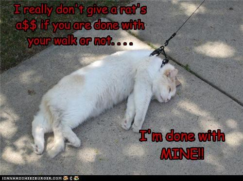 I really don't give a rat's a$$ if you are done with your walk or not. . . .