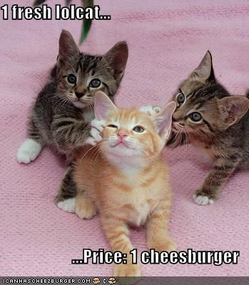1 fresh lolcat...  ...Price: 1 cheesburger